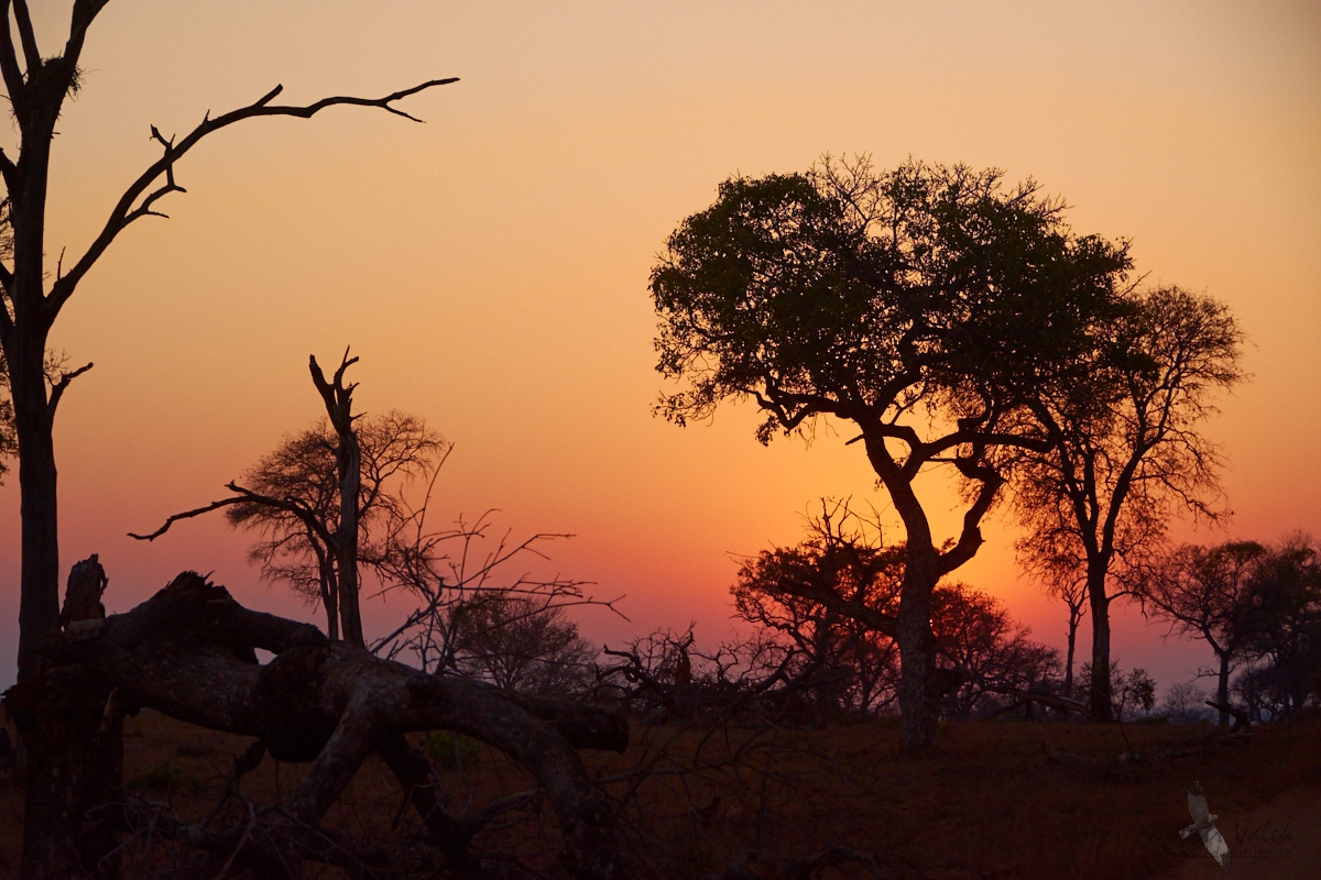 Bush,  Kruger national park