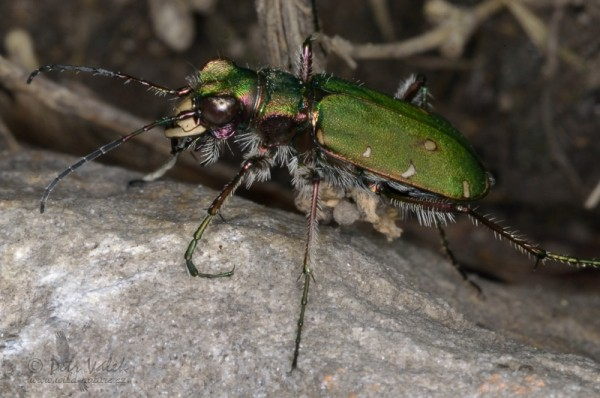 insecta_00027.jpg